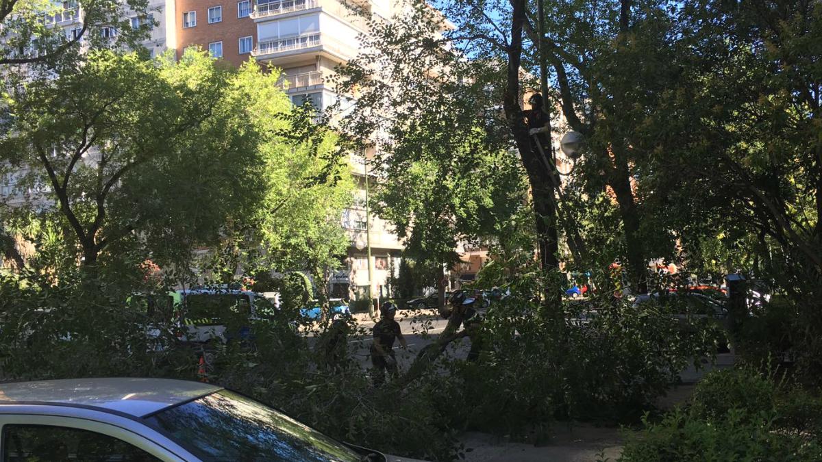 Los bomberos retiran la rama caída esta mañana.