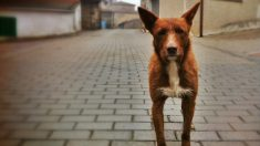 Los perros podrán acceder al cine por primera vez en Madrid. (Foto: ADP)