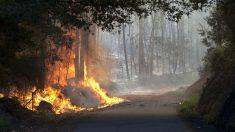 Las llamas arrasan el monte cerca de la localidad de Soutomaior, Pontevedra, este miércoles. (EFE)