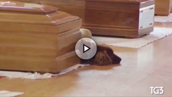 Este perro no quiso abandonar a su dueño fallecido en el terremoto de Italia