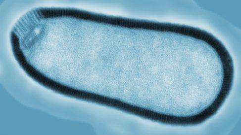 Descubre el virus zombi más grande del mundo