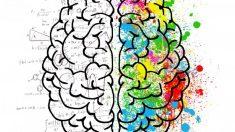 Descubre qué es el sistema de recompensa de nuestro cerebro