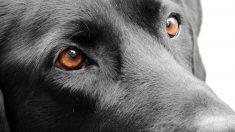 Descubre si los perros ven en blanco y negro