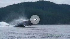 ballena-piraguistas