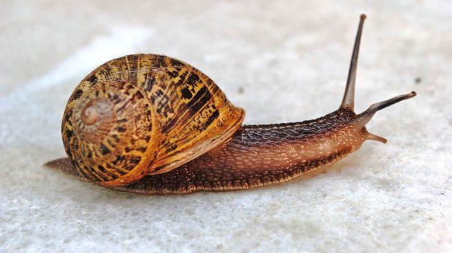 concha los caracoles
