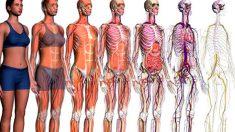 Descubre los sistemas y aparatos del cuerpo humano