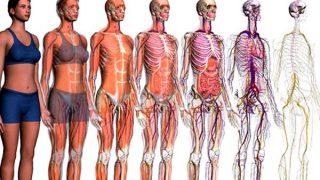 ¿Conoces los sistemas y aparatos del cuerpo humano