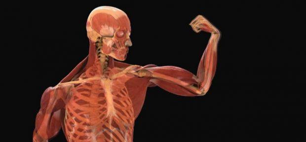 Conoces los sistemas y aparatos del cuerpo humano?