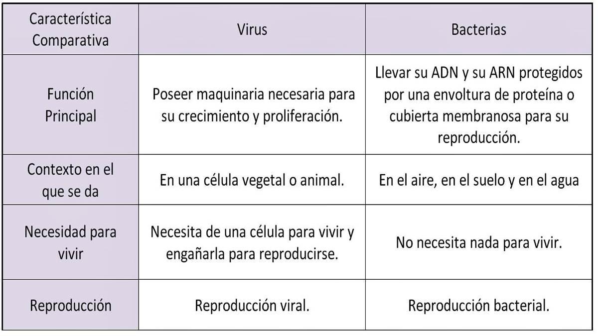 diferencias-virus-bacterias-s