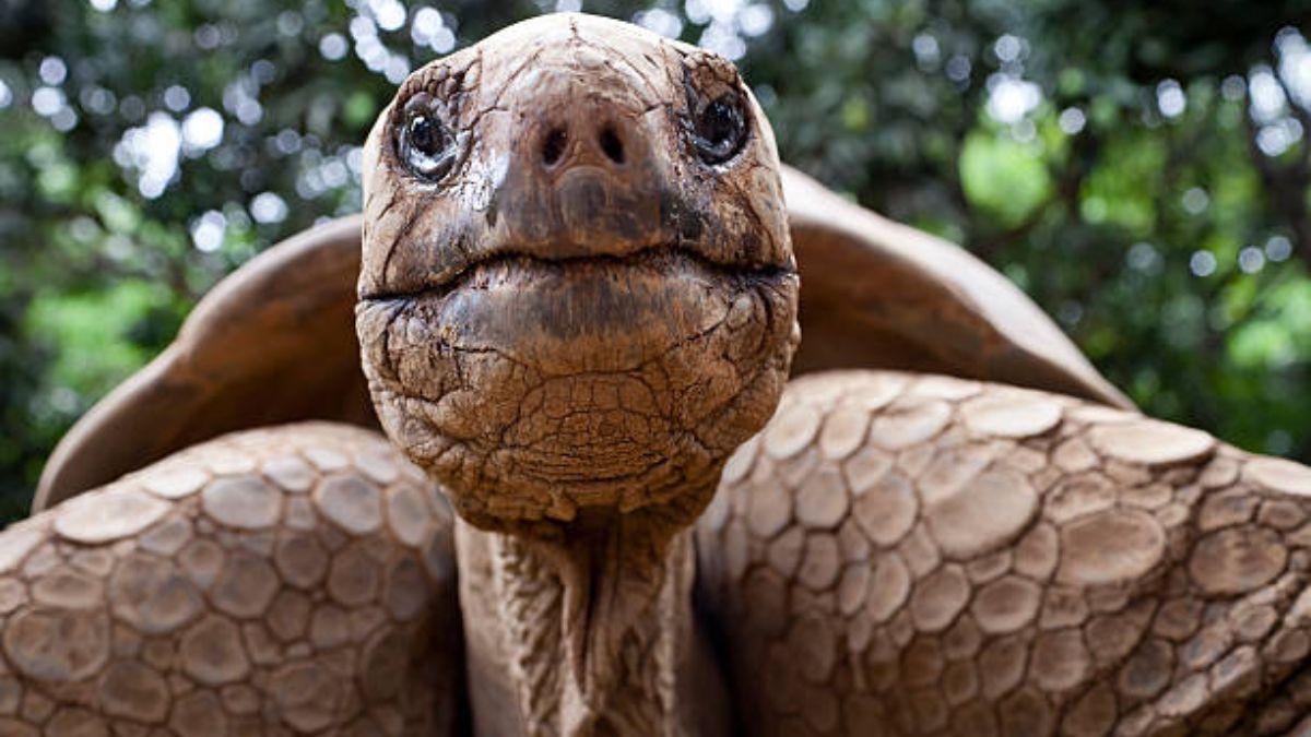 Cuál es la edad media de las tortugas