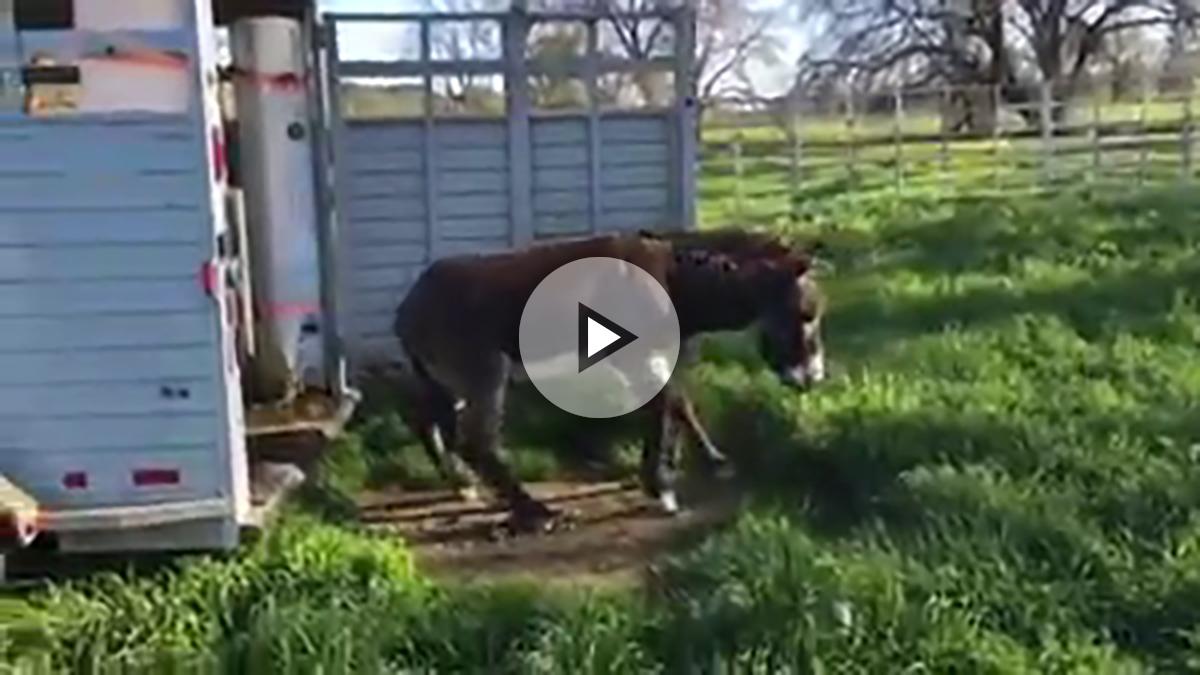 burros-sorpresa