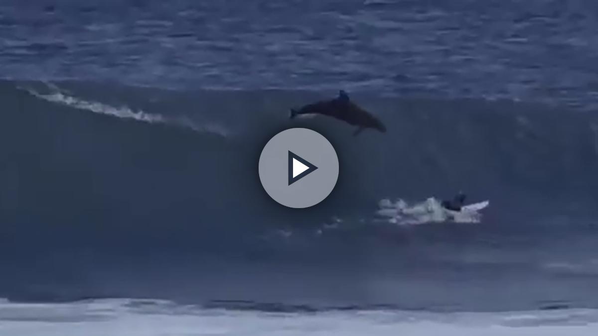 delfin-surf