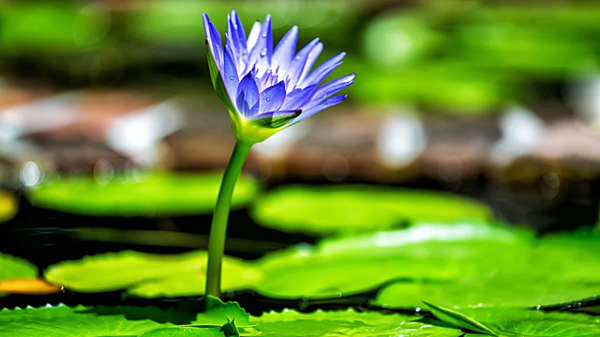 C mo respiran las plantas for Que son plantas ornamentales ejemplos