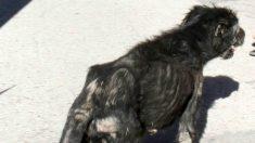 Imagen que acompaña la denuncia de Animal Rescue contra José Luis Moreno.