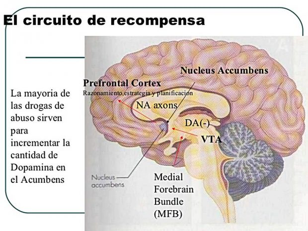 sistema-recompensa-cerebro
