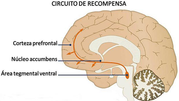 sistema recompensa cerebro
