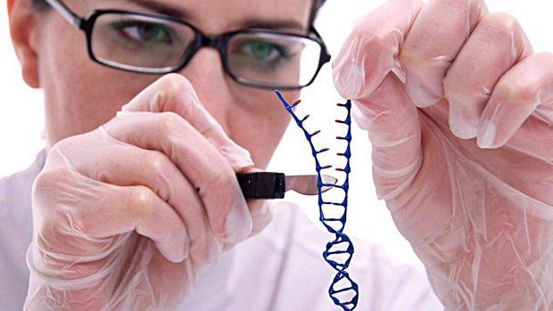 manipulación genetica adn