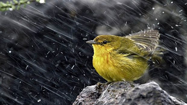 lluvia como produce