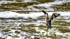 Imagen del rio Tajo cubierto de espuma (Foto: Efe).