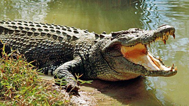 ¿Son peligrosos los cocodrilos?
