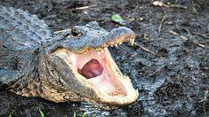 diferencias-cocodrilos-caimanes-ss