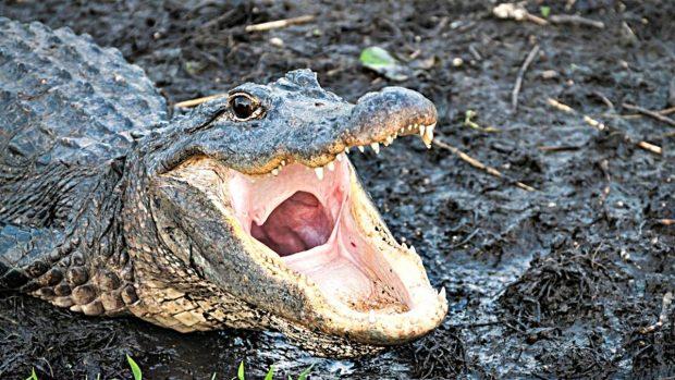 Los animales de mayores mandíbulas