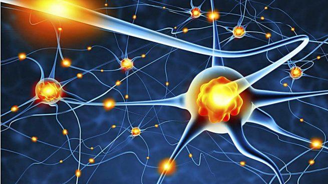 Resultado de imagen de Las neuronas del cerebro