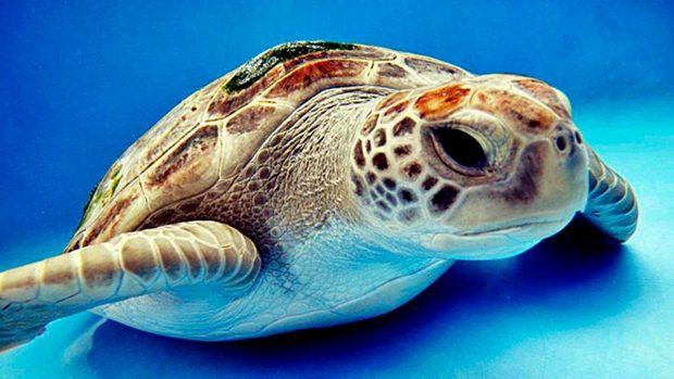 ¿Cuántos años viven las tortugas? - 02