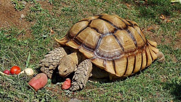 ¿Cuántos años viven las tortugas? - Tortugas terrestres
