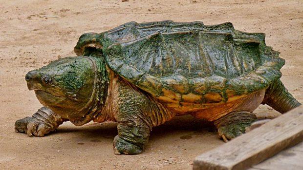 ¿Cuántos años viven las tortugas? - 01