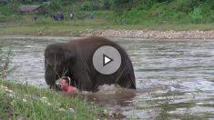 elefante-salvador