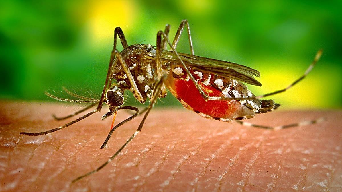 Dos casos de Dengue contraídos en España.