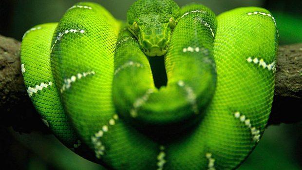 serpiente mas grandes