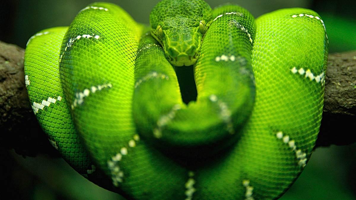 serpientes mas grandes