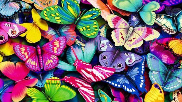 mariposas datos curiosos insectos