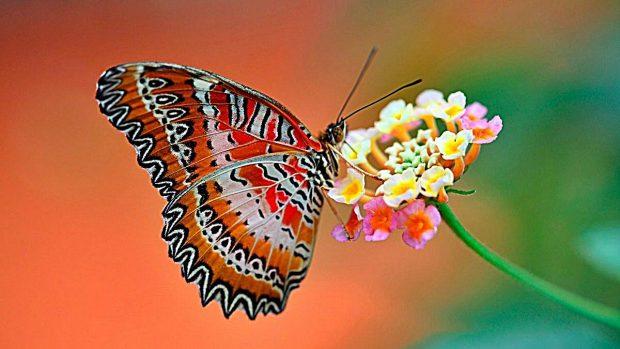 mariposas datos interesantes