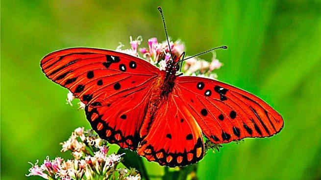 datos mariposas