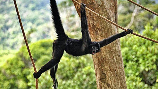 animales amazonas