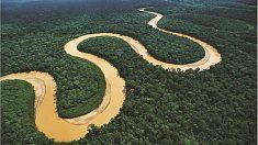 Descubre 5 animales que sólo existen en el Amazonas