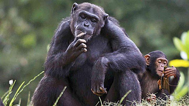acfbb8c85d Animales inteligentes: Los 5 animales más inteligentes del mundo