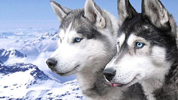 Los 5 animales m s inteligentes del mundo - Animales con personas apareandose ...