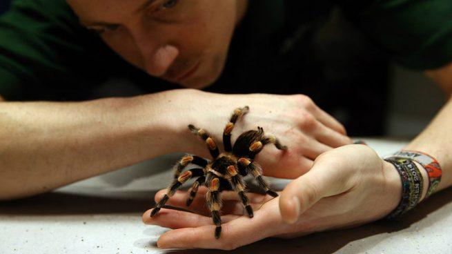 El veneno de una araña podría ser un salvavidas para las víctimas de un ictus