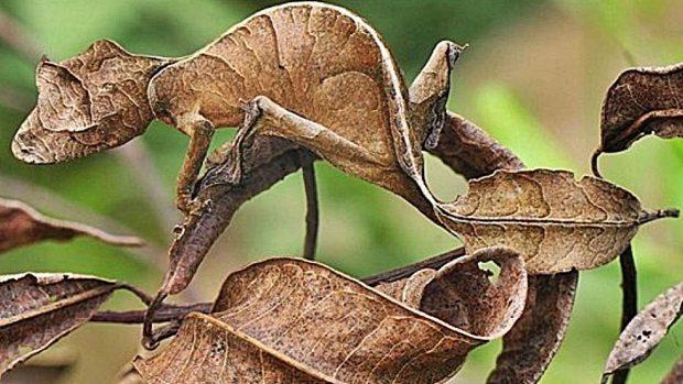camuflaje animales cripsis tipos