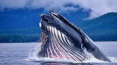 Descubre los 5 animales más longevos del mundo