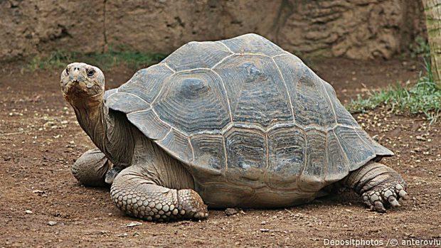 animales longevos tortuga galapagos