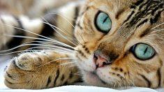 Descubre 7 sorprendentes cosas que no sabías sobre los gatos
