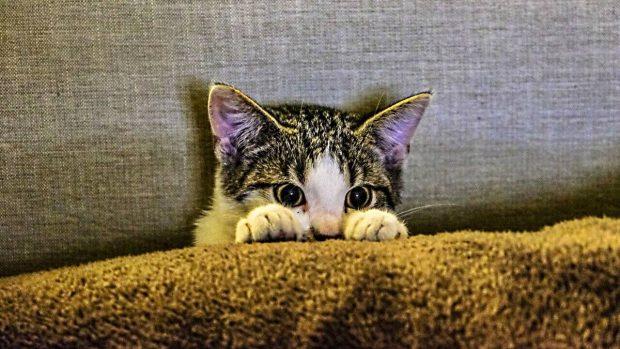 curiosidades gatos soprendentes