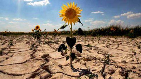 Descubre qué provoca el efecto invernadero en la Tierra