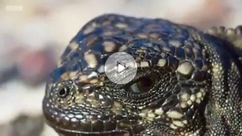 iguana-septiembre