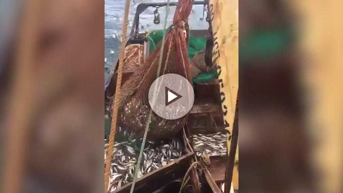 leones-marinos-sorpresa